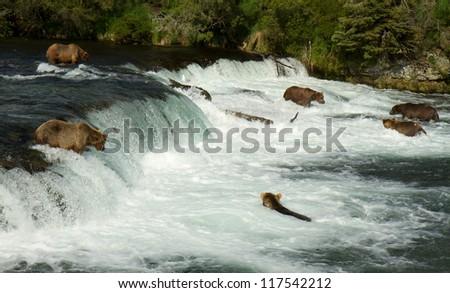 Grizzlies - Katmai National Park - Alaska - stock photo