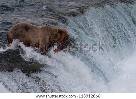 Grizzly bear on waterfall - stock photo