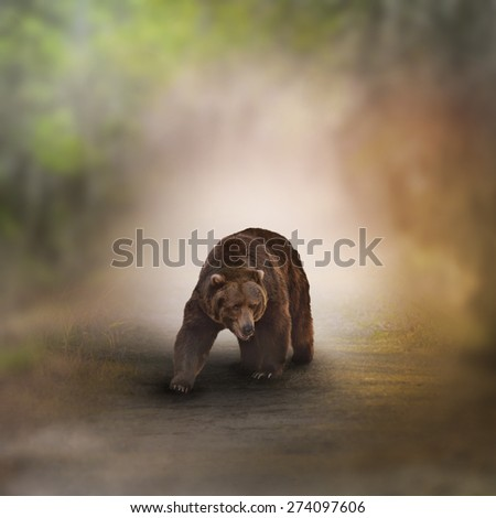 Grizzly Bear Walking In A Wood - stock photo