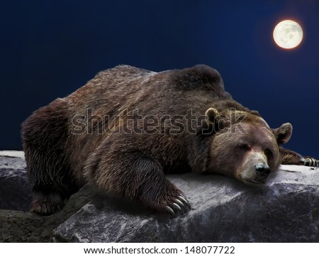 Grizzly brown bear sleeping on rock during full moon night      - stock photo