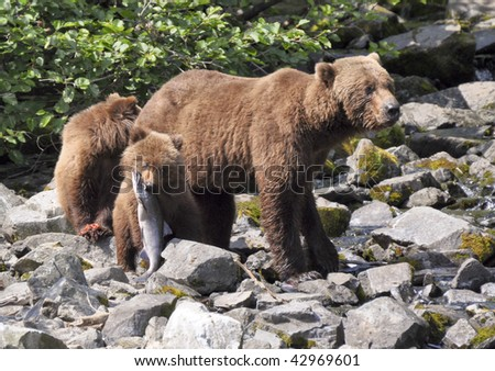 grizzly cub guards her catch - stock photo