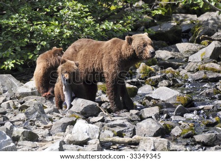 grizzly cub with fish near mother - stock photo