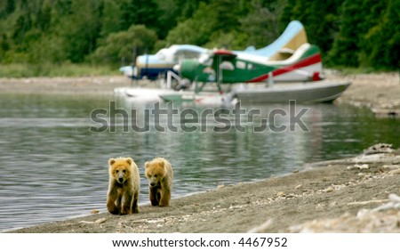 Grizzly cubs and float planes in Katmai National Park, Alaska - stock photo
