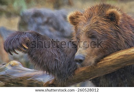 Grizzly in the Rain - stock photo