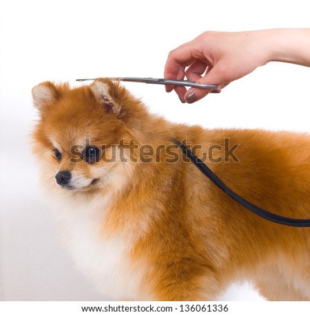 Grooming dog - stock photo