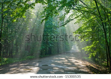 Ground road crossing old deciduous forest with beams of light entering - stock photo