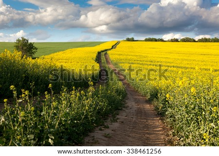 Ground Road in Flowering Field, beautiful countryside, sunny day - stock photo
