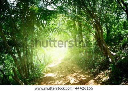 ground road in jungle of Dominican - stock photo
