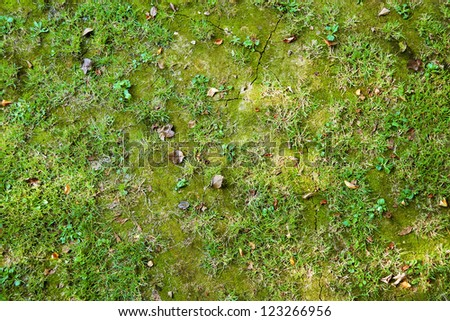 Ground with grass and moss - stock photo