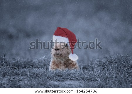 Groundhog with his Christmas Hat on in the Winter During a Snowstorm.  - stock photo