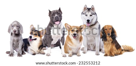 Group dogs in front of white background - stock photo