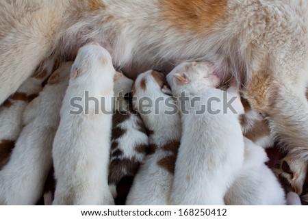 group dogs white dog newborn sleeping so cute - stock photo