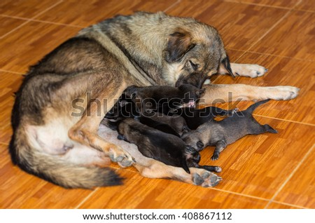 group new born dogs eating milk,thailand - stock photo