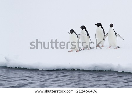 group of Adelie penguins on the ice near open water - stock photo