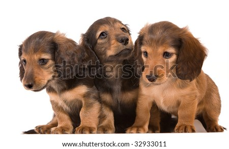 Group of adorable puppies, isolated on white - stock photo