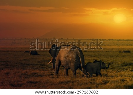 Group of African elephants  (Loxodonta africana) in Amboseli National Park, Kenya - stock photo