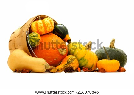 Group of autumn squash and pumpkins spilling from a harvest pail                      - stock photo