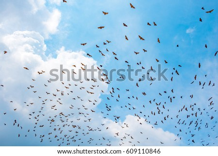 group of bat flying on the sky