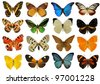 group of beautiful colorfull butterfly in front of white background - stock photo