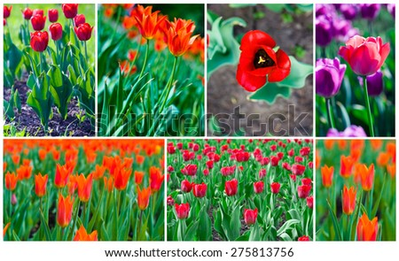 group of beautiful sping flowers tulips - stock photo