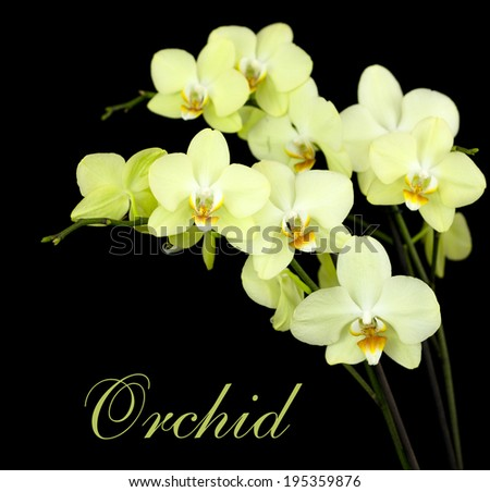 Group of beautiful yellow orchids on dark background - stock photo