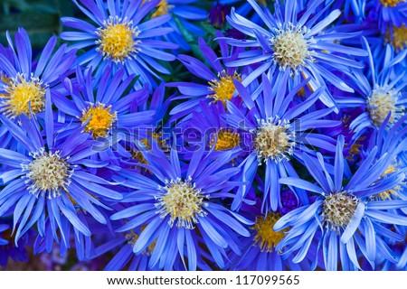 Group blue flowers yellow centers stock photo royalty free group of blue flowers with yellow centers mightylinksfo
