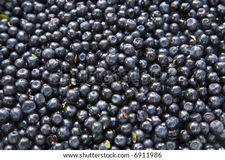 Group of blueberries.