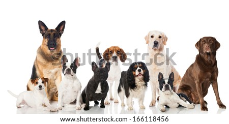 Group of breed dogs - stock photo