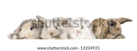 group of bunnies in front of a white background - stock photo