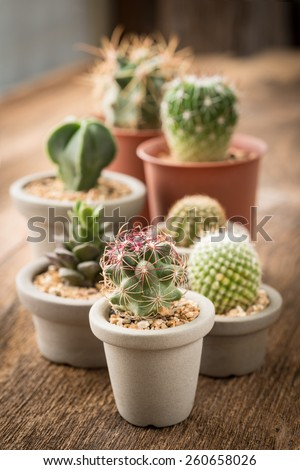 Group of cactus on on the wood background,Selective focus,Studio Shot - stock photo