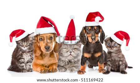 Group of cats and dogs in christmas hats sitting in a row. isolated on white background