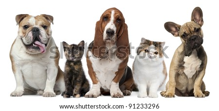 Dog And Cat Stock Images, Royalty-Free Images & Vectors | Shutterstock