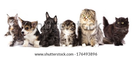 Group of cats and dogs, puppy and kitten - stock photo