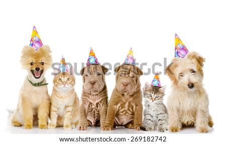Group of cats and dogs with birthday hats. isolated on white background - stock photo