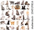 Group of 36 cats breeds in front of a white background - stock photo