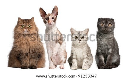 Group of cats sitting in front of white background - stock photo