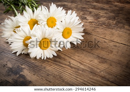 group of chamomile flowers on wooden background - stock photo
