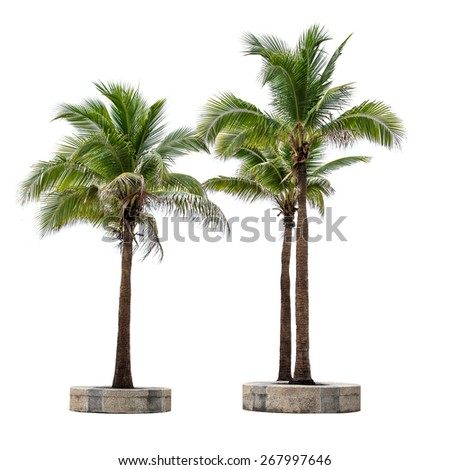 Group of coconut tree isolated on white background - stock photo