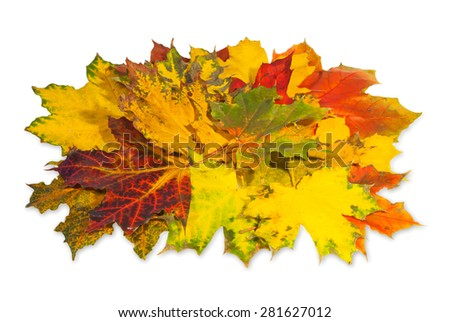 Group of colorful autumn leaves isolated on white background . - stock photo