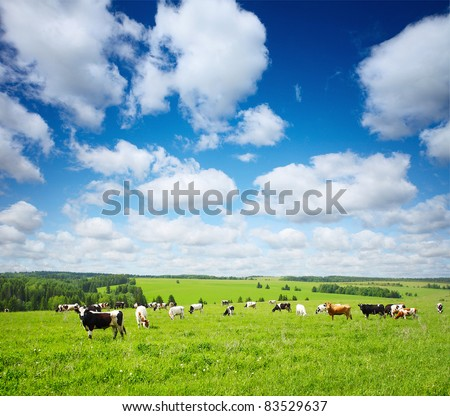 Group of cows grazing on green meadow with blue cloudy sky - stock photo