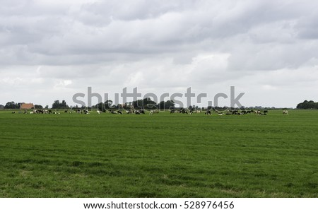 group of cows on farm in Friesland part of Holland