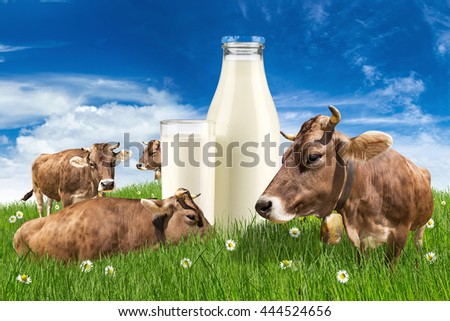group of cows on green meadow with milk bottle and glass in front of blue sky