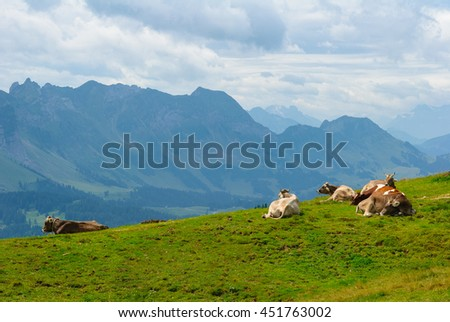 Group of 6 Cows resting on the Kronberg Meadows in the Swiss Alps. Overlook on the Alpstein Mountain Range. Canton of Appenzell Innerrhoden, Switzerland. - stock photo