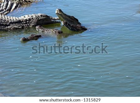 Group of crocodiles competing in lake