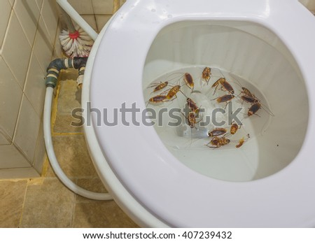group of death cockroach in the toilet . - stock photo