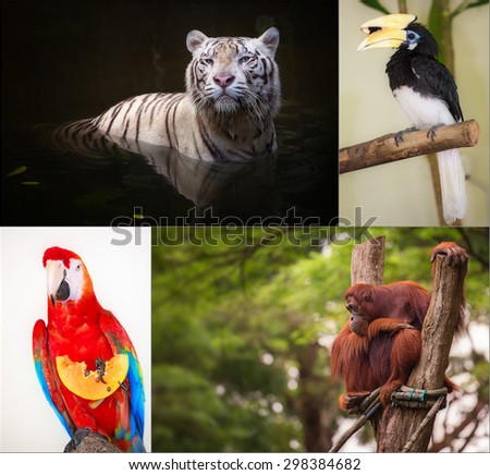 Group of different wild animal of Asia - stock photo