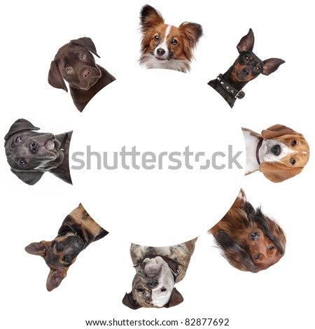 group of dog portraits around a circle. with clipping path - stock photo