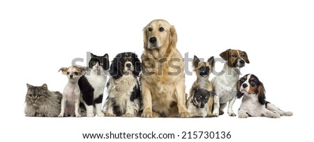 Group of Dogs and a cat - stock photo