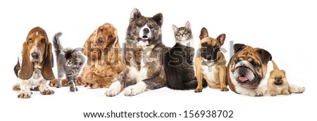 Group of dogs and cat different breeds, cat and dog - stock photo