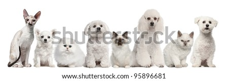 Group of dogs and cats sitting in front of white background - stock photo